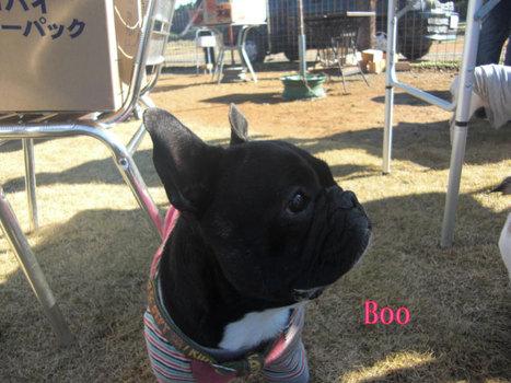 Boo_2